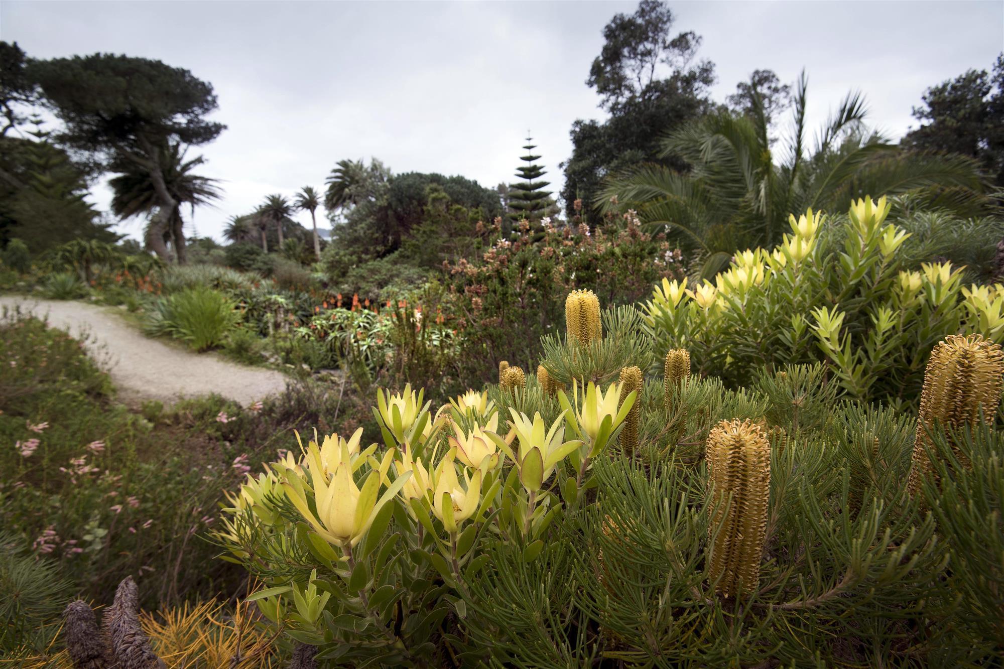 Banksia Custom