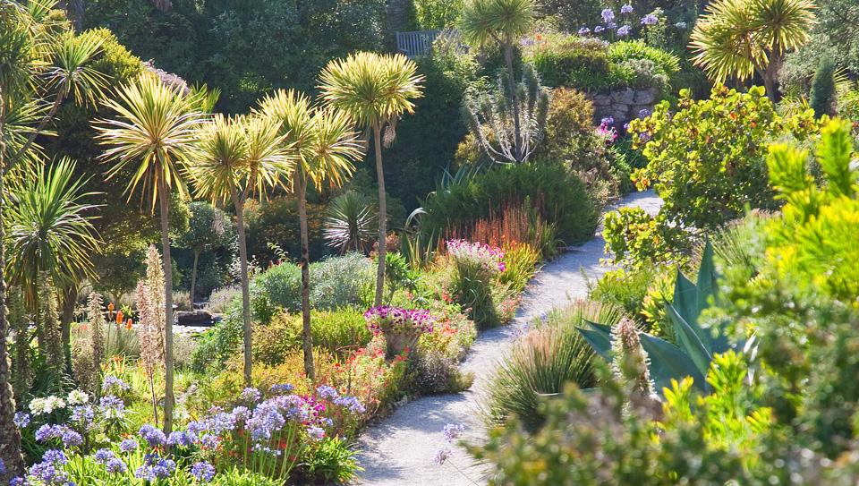 Tresco Abbey Garden 4